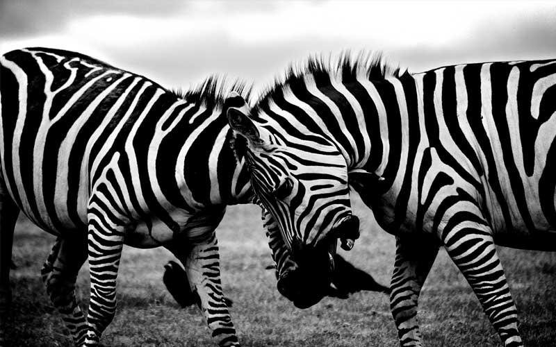 Amantes de los Animales
